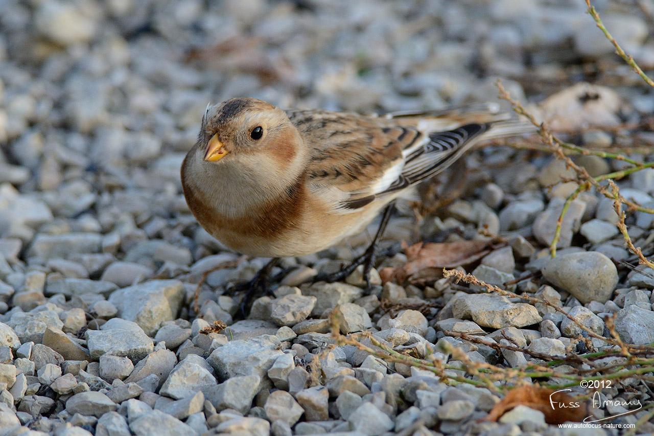 Petit oiseau non identifé au Lac du Der