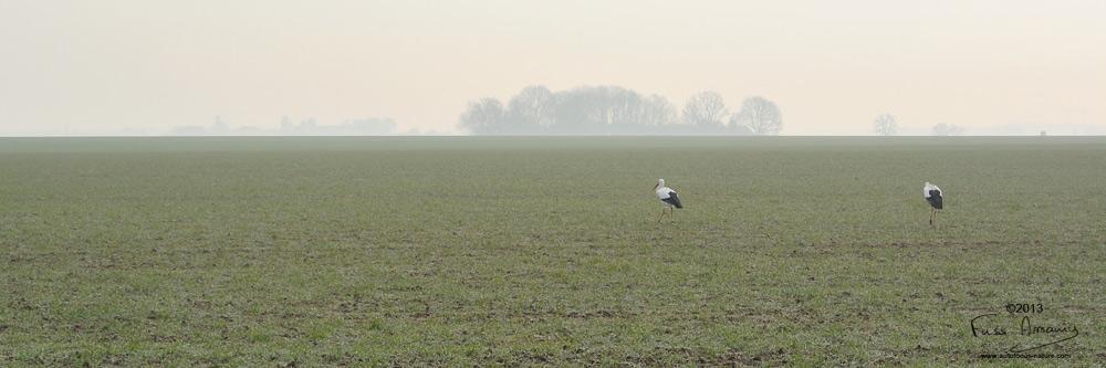 Cigognes en Yvelines