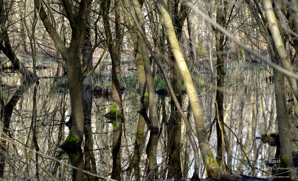 Marais dans la forêt de la réserve naturelle de Bonnelles
